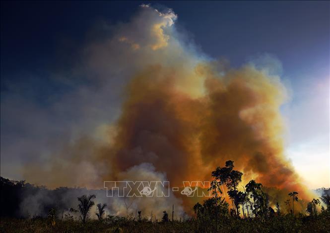 Brazil ngừng hoạt động phòng chống cháy rừng do thiếu nguồn lực - Ảnh 1