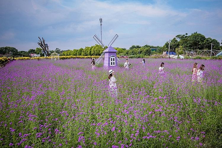 Giới trẻ rủ nhau check-in vườn oải hương thảo tím lãng mạn ở Hà Nội - Ảnh 1