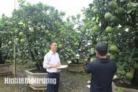 Song Phương (Hoài Đức): Tạo hướng đột phá phát triển nông nghiệp gắn với môi trường
