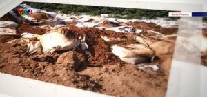 Nghi vấn doanh nghiệp xử lý môi trường chôn lấp chất thải nguy hại