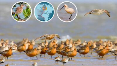 Kinh nghiệm phát triển du lịch bền vững từ khu di sản Wadden