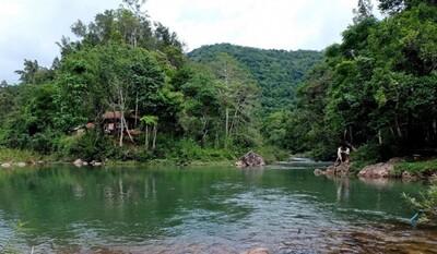 Rừng nguyên sinh còn nguyên của Việt Nam chỉ còn 0,25%
