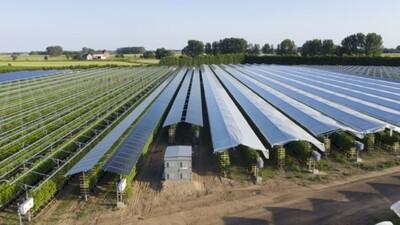 Phát triển mô hình sản xuất nông nghiệp kết hợp điện mặt trời áp mái tại Hậu Giang