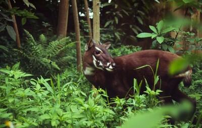 Hoàn thiện pháp luật bảo vệ động vật hoang dã - Bài cuối: Cân nhắc cấp phép gây nuôi thương mại