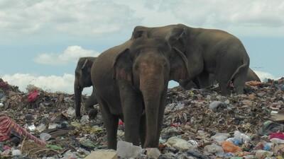 Sri Lanka chính thức 'nói không' với nhựa dùng một lần