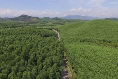 Bình Định: Gần 4.200 ha rừng được cấp chứng chỉ FSC của Đức