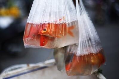 Thả cá, đừng thả túi nilon