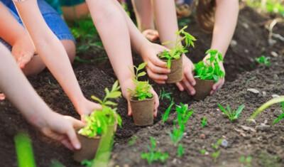 Thủ tướng phát động Tết Trồng cây Xuân Tân Sửu 2021 tại Tuyên Quang