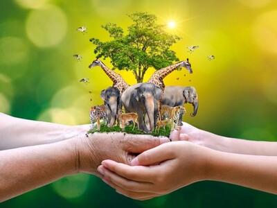 Chung tay hành động bảo vệ động vật hoang dã