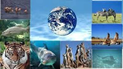 Bảo tồn đa dạng sinh học vì mục tiêu phát triển bền vững