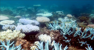 Cảnh báo hơn 90% các rạn san hô trên thế giới 'lâm nguy' trong vài thập kỷ tới