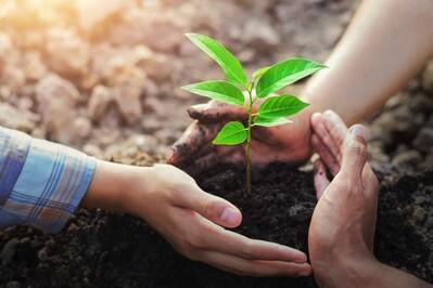 Thanh Hóa: Phấn đấu trồng hơn 30 triệu cây xanh trong 5 năm tới
