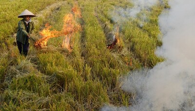 Bộ TN&MT 'vào cuộc' yêu cầu xử lý nghiêm hành vi đốt rơm rạ gây ô nhiễm