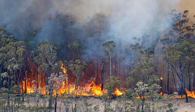 EU cần có các biện pháp ràng buộc pháp lý để bảo vệ thiên nhiên