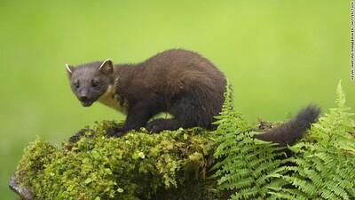 Những động vật tuyệt chủng trong tự nhiên được đưa trở lại