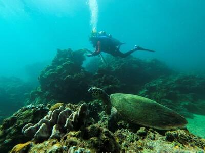 Dọn rác thải nhựa, làm sạch san hô để cứu hệ sinh thái biển