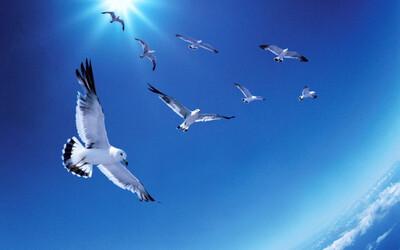 Loài chim có thể báo sớm thảm họa thiên nhiên?