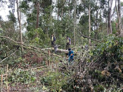 Đắk Nông: Thu hồi 220 ha rừng bị doanh nghiệp tàn phá
