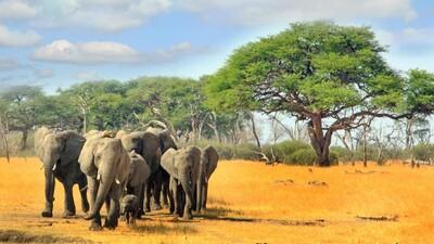Các loài vật có nguy cơ bị tuyệt chủng có xứng đáng được quan tâm?