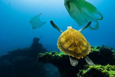 Ô nhiễm nhựa sẽ tăng gấp đôi vào năm 2030