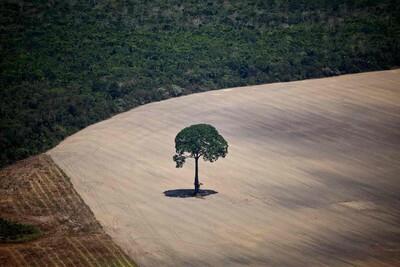 42.600 ha rừng Amazon bị 'tàn sát' chỉ trong nửa năm