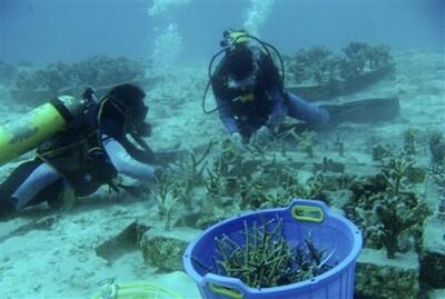 'Trồng rừng' dưới đáy biển giúp chặn đà suy giảm đa dạng sinh học