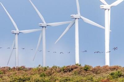 Giảm thiểu tác hại của turbin điện gió đến chim trời
