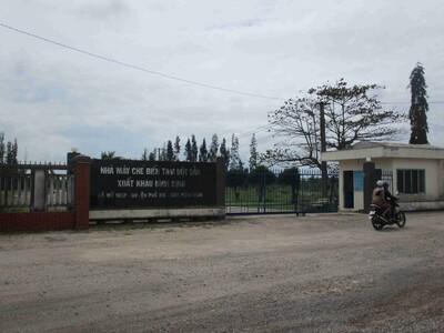 Chưa khắc phục hậu quả môi trường, Nhà máy chế biến tinh bột sắn xuất khẩu Bình Định bị tạm dừng hoạt động