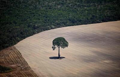Tài nguyên thiên nhiên đang dần bị huỷ hoại