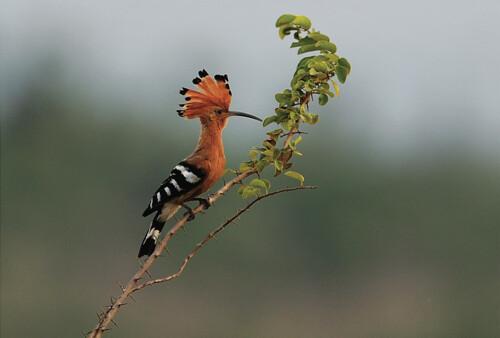 Những loài chim đẹp và lạ bậc nhất Việt Nam