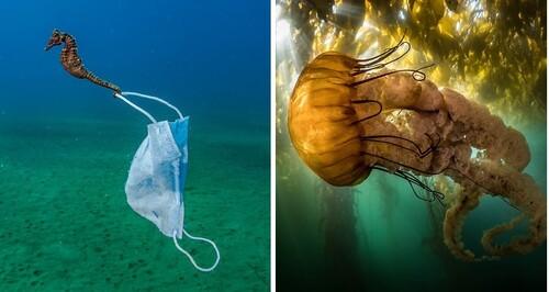 Cuộc thi Nhiếp ảnh đại dương 2021: Những góc nhìn 'Lạ' về môi trường biển